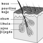 Olilab - Svrbež vlasišta